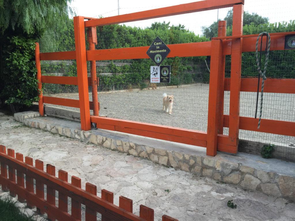 albergo cani – ikners